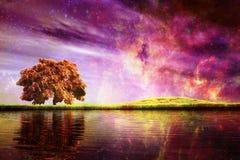 Noite mágica Foto de Stock Royalty Free