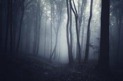 Noite misteriosa na floresta em Dia das Bruxas com névoa Imagem de Stock Royalty Free