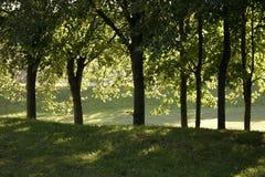 Noite morna no parque imagens de stock royalty free