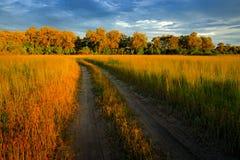 Noite na estrada do cascalho no savana, Moremi, delta de Okavango em Botswana, Afrivca Por do sol na natureza africana Grama dour fotografia de stock royalty free