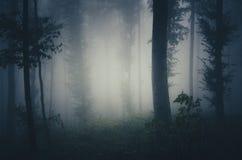 Noite na floresta assombrada com névoa azul Imagem de Stock