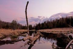 Noite na lagoa do castor no rio do pinho imagens de stock royalty free