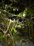 Noite nevado Imagens de Stock