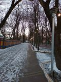 Noite no parque do inverno imagem de stock royalty free