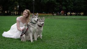 Noiva com cães roncos vídeos de arquivo