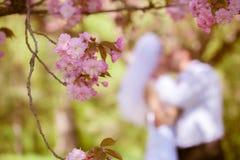 Noiva e noivo em um dia do casamento Fotografia de Stock Royalty Free