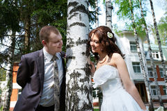 Noiva e noivo felizes perto do vidoeiro Foto de Stock