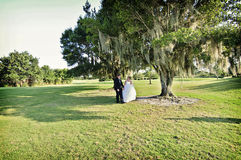 Noiva e noivo sob a árvore Foto de Stock Royalty Free