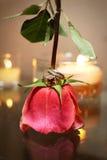 A noiva e os noivos soam na rosa do vermelho não-tradicional Foto de Stock