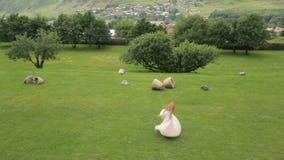 A noiva feliz está dançando na grama verde contra o contexto das montanhas e do movimento lento do pomar filme