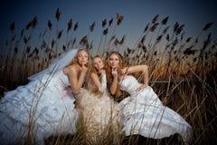 Noivas da noite Fotos de Stock Royalty Free