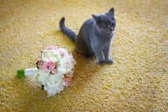 Noivo cinzento do gato com um ramalhete Fotografia de Stock Royalty Free
