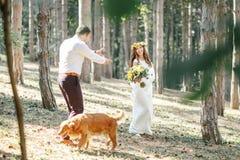 Noivo com a noiva e o cão Imagem de Stock