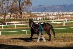 Noivo Training Track Exercise do cavalo de raça Imagem de Stock