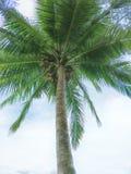 Noix de coco à la mer photo stock