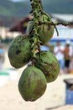 Noix de coco à la plage Images libres de droits
