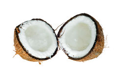 Noix de coco Photo stock