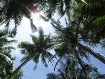 Noix de coco Photo libre de droits