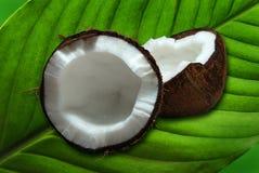 noix de coco Photographie stock libre de droits