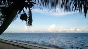 Noix de coco au coucher du soleil Image libre de droits
