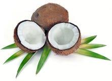 Noix de coco avec des feuilles Photos stock