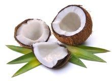 Noix de coco avec des feuilles Photographie stock