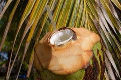 Noix de coco avec la boisson de paille Image libre de droits