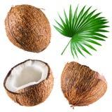Noix de coco avec la palmette sur le fond blanc. Collection Photographie stock libre de droits