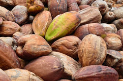 Noix de coco, avec la peau externe Images libres de droits
