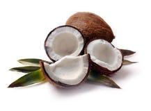 Noix de coco avec le plan rapproché de feuilles Photo stock