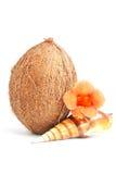Noix de coco avec le seashell et fleur d'isolement sur le blanc images stock
