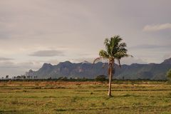 Noix de coco ; Champ de terre de pays photo libre de droits