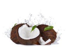 Noix de coco criquées dans l'éclaboussure de l'eau sur le blanc Photographie stock libre de droits