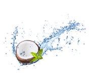 Noix de coco criquées dans l'éclaboussure de l'eau sur le blanc Images stock