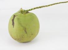 Noix de coco d'isolement Image libre de droits