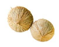 Noix de coco de deux jeunes d'isolement Photo stock