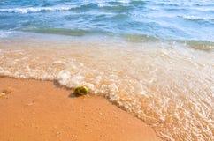 Noix de coco de plage Photographie stock