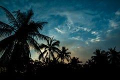 Noix de coco de silhouette Photo libre de droits