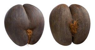 Noix de coco du ` s de mer des Seychelles sur le fond d'isolement photo libre de droits