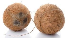 Noix de coco entières Photographie stock