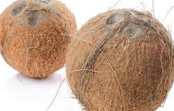 Noix de coco entières Images libres de droits