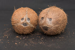 Noix de coco entières texture de fibre de noix de coco Images libres de droits