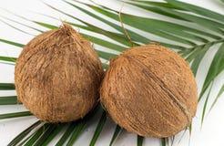 Noix de coco entières sur des feuilles de noix de coco sur le blanc Photos stock