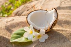 Noix de coco et frangipani Image stock