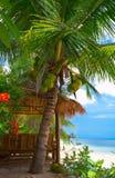Noix de coco et hutte Image libre de droits