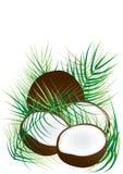 Noix de coco et lames de noix de coco Photo stock