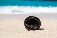 Noix de coco et mer Photos stock