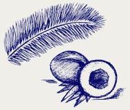 Noix de coco et palmier Photo libre de droits