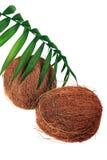 Noix de coco et plante fraîche photo stock