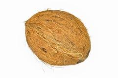 Noix de coco exotique de fruit avec la surface brune photos stock